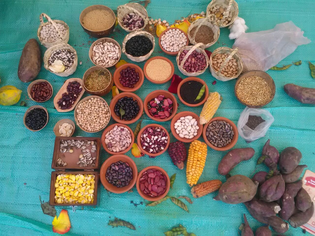 RGS red de guardianes de semillas ecuador agroecologia permacultura organico