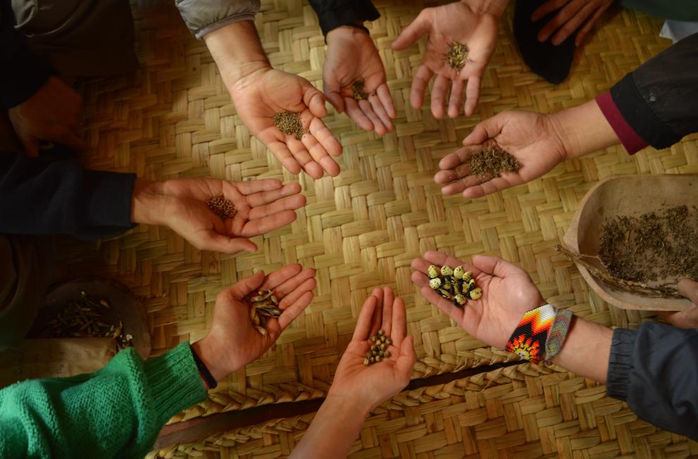 red de guardianes de semillas ecuador agroecologia organico permacultura