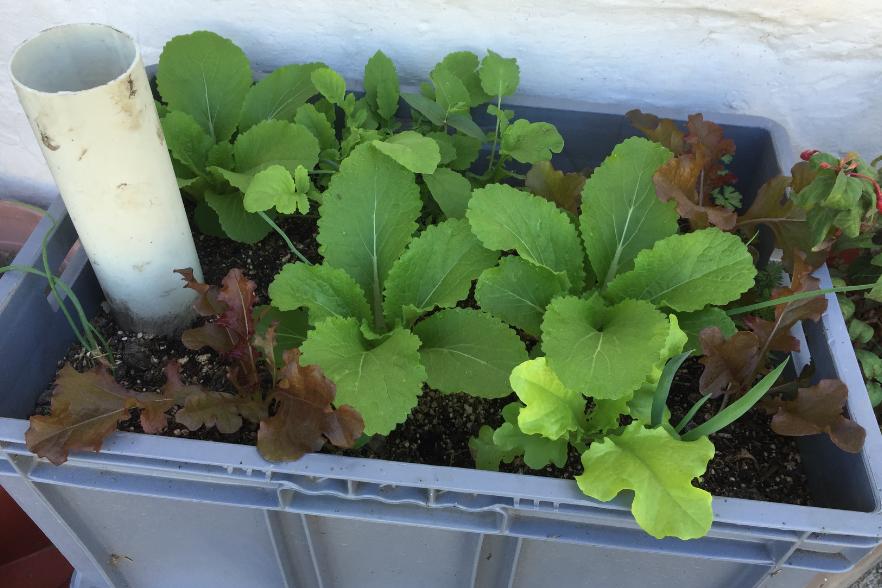 sembrar en recipientes red de guardianes de semillas ecuador agroecologia permacultura organico