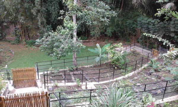tierra bellbaum voluntariado red de guardianes de semillas ecuador